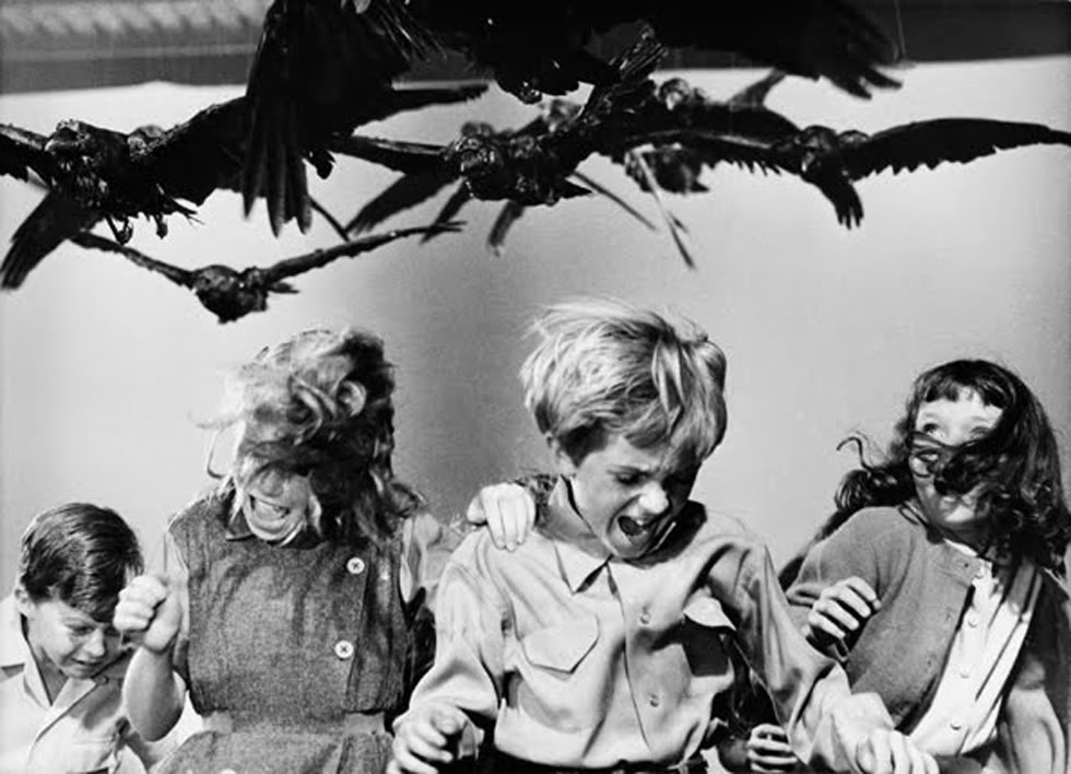 the strong roles of the female characters in the birds a film by alfred hitchcock